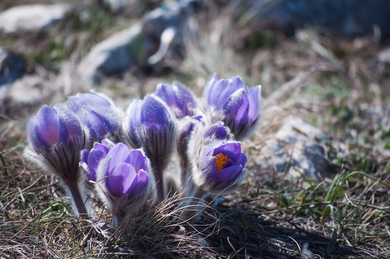 Названия цветов первоцветы фото и